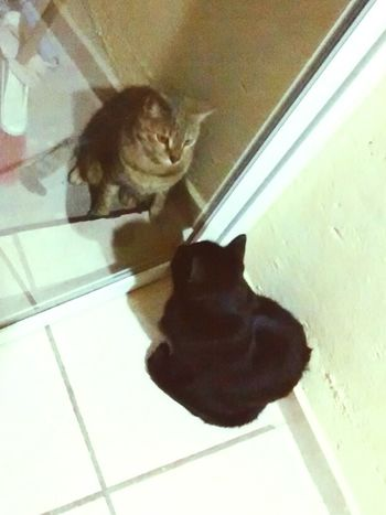Mirror Catstagram Window Reflections Pet Photography