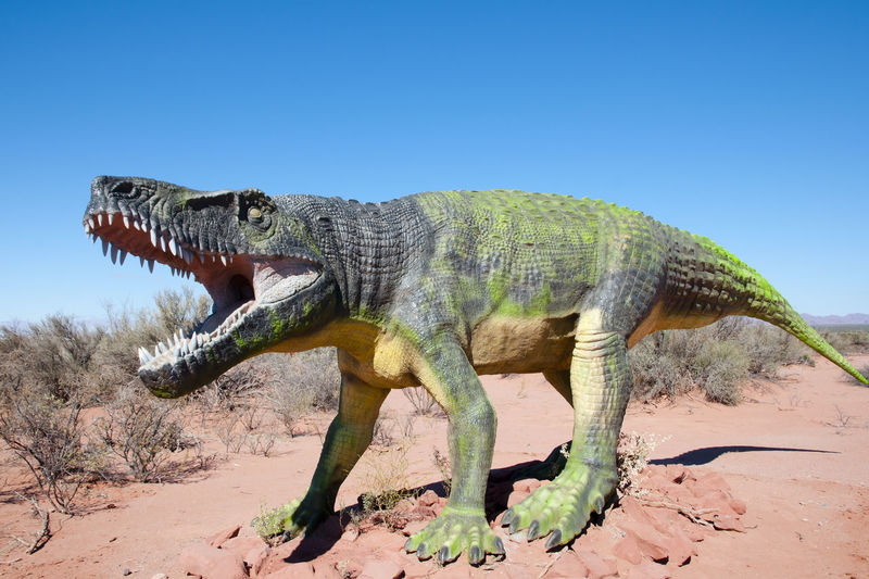 Triassic Fasolasuchus Dinosaur Replica - Argentina Dinosaur Fasolasuchus Triassic Animal Wildlife Animals In The Wild Argentina Mammal One Animal