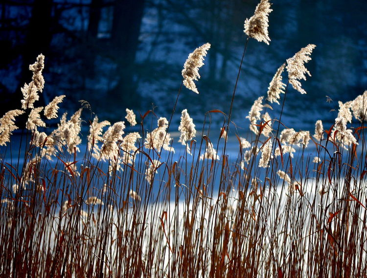 Warm Colors Warm Colours Winter Wonderland Beauty In Nature Wintersun Into The Sun Near The Sea Wintergarden Winterflowers In The Mood Mood Berlin Photography Shades Of Winter Nature Plant No People Outdoors Growth Day Flower