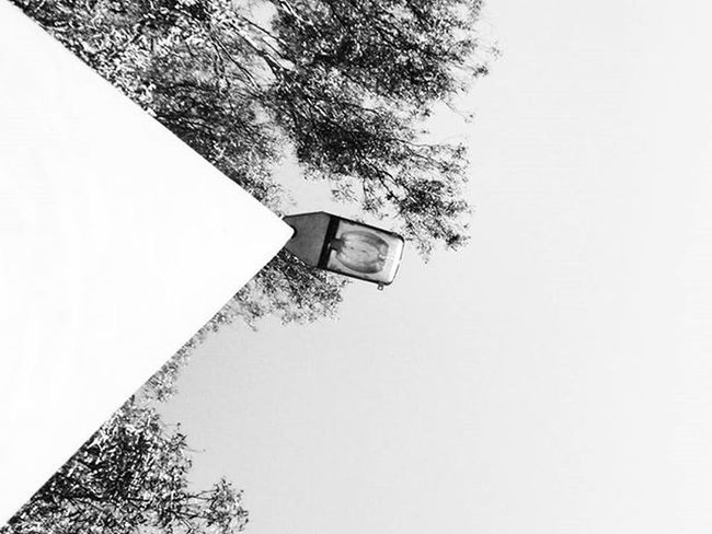 Streetlight & Tree Blackandwhitephotography Blackandwhite Bnw Bnw_maniac Bnwlovers Monochrome Bnw_lover Bnw_lovers Mono
