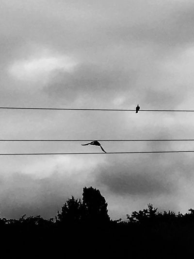 Silhouettes Bird Photography Shades Of Grey Shadows Birds Flying Bird Distant Nature Photography Nature Nature_collection Black And White