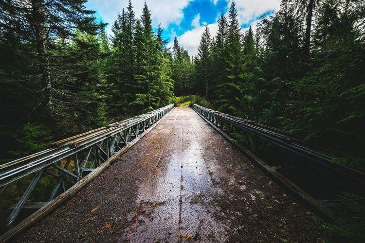 Follow your trail Mt. St. Helens  Travel Travel Photography Hiking USA Bridge Woods Landscape Explore