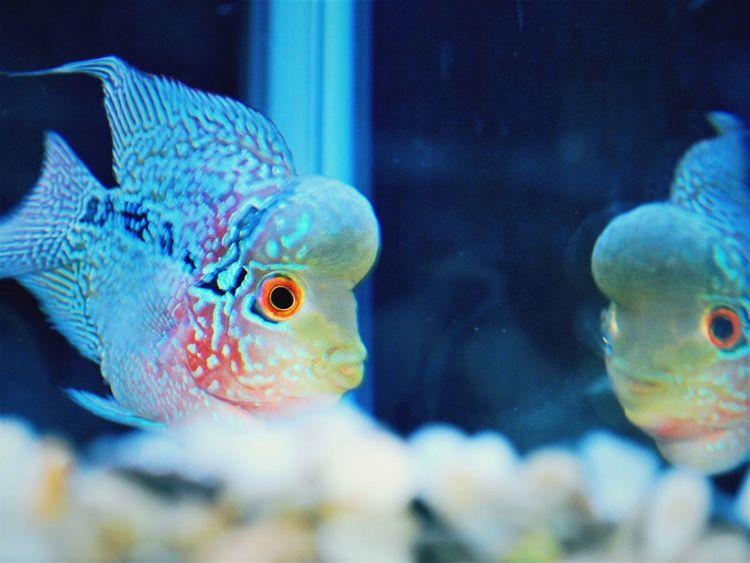 Aqua Marine Aquarium Fish Animal Themes Animals In Captivity Fish One Animal Underwater Swimming Aquarium