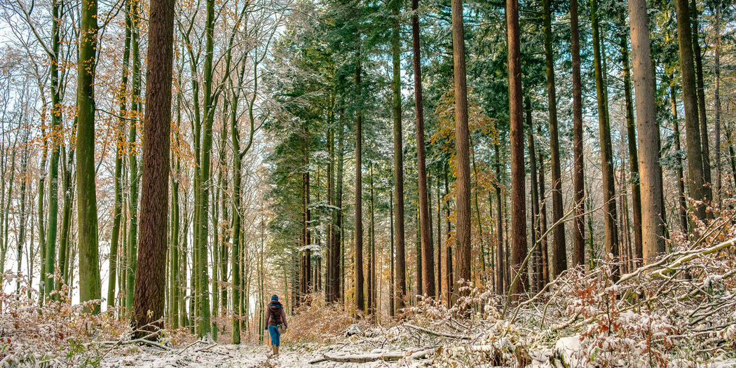 Abundance Beauty In Nature Beauty In Nature Branch Day Forest Grove Growth Landscape Nature Non-urban Scene One Person Outdoors Panorama Path In Nature People Pine Woodland Real People Scenics Tranquility Tree Tree Trunk Walking Winter