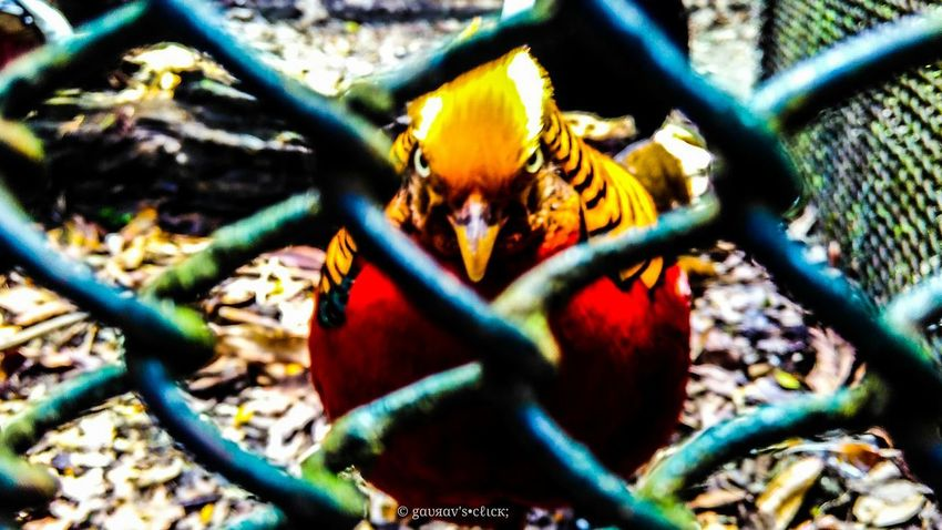 Outdoors Power In Nature First Eyeem Photo Sky Day Angry Bird Bird Photography Zoo Photography  Holidays DARJEELING BEAUTY 😚 Scary Eyes Killing Me Softly EyeEn Nature Lover Eyeemphotography Eyeemphoto EyeEm Birds EyeEm EyeEmNewHere EyeEm Best Shots - Nature