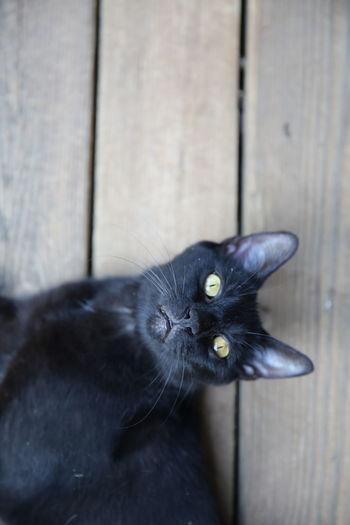 Directly Above Shot Of Black Cat Lying On Boardwalk
