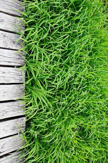High angle view of plants growing on wood