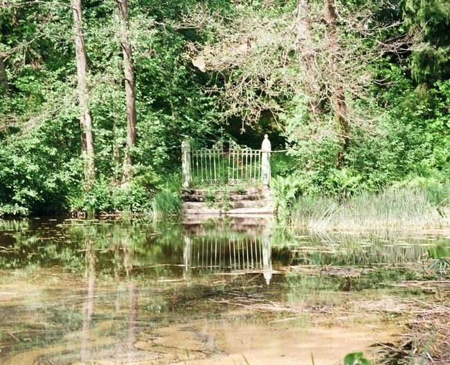 """Filmphoto by Zenit am. """"pacification in nature"""" 35mm Film #zenit #ishootfilm #film Photography Water Tree Reflection Outdoors Day No People The Graphic City Nature Beauty In Nature Plant First Eyeem Photo"""