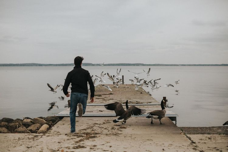 Rear view of man running behind water birds on jetty over lake against sky