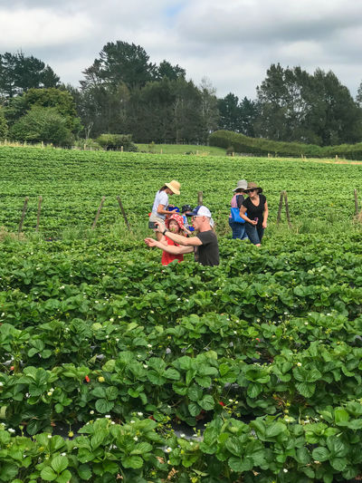 Strawberry Picking Agriculture Beauty In Nature Cloud - Sky Crop  Day Farm Farmer Field Green Color Growth Leisure Activity Lifestyles Nature Outdoors Plant Real People Rural Scene Scenics Selfie Sky Strawberry Fields Togetherness Two People