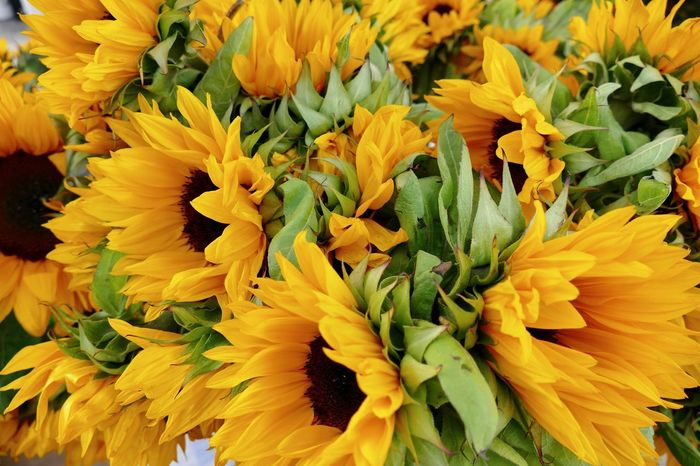 Sunflowers Backgrounds Beauty In Nature Blooming Bouquet Close-up Day Farmers Market Flower Flower Head Flower Market For Sale Fragility Freshness Full Frame Growth Nature No People Outdoors Petal Plant Springtime Sunflowers Vibrant Color Yellow