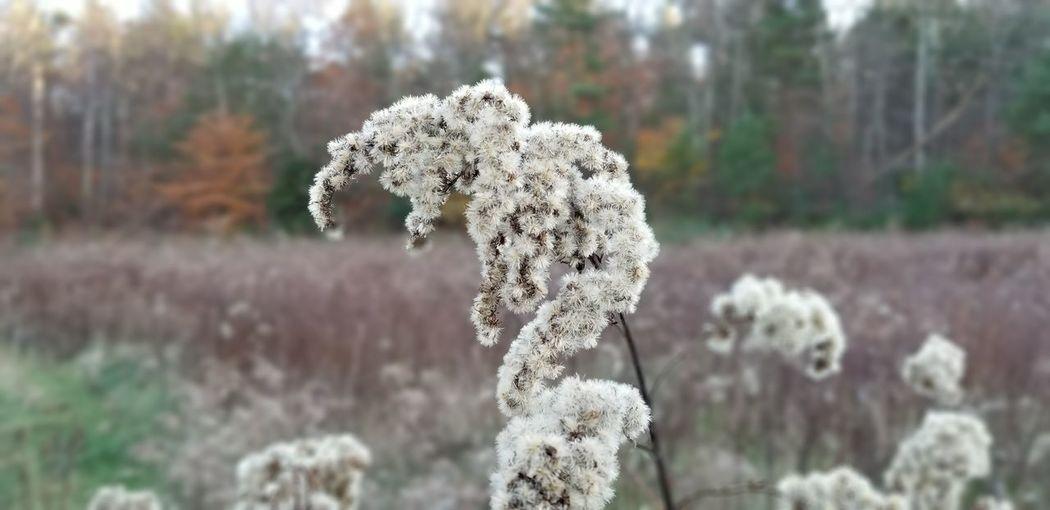EyeEmNewHere Milkweed White White Flower EyeEm Selects Tree Close-up Plant Growing Blooming Flower Head Fragility
