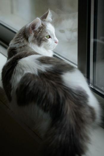 Cat sitting beside window