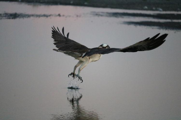 Birds Of EyeEm