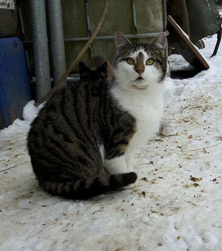Katze vom Bauernhof Domestic Cat Pets Domestic Animals Animal Themes Mammal One Animal Cat Day Katzenfoto Katzen Beliebte Fotos