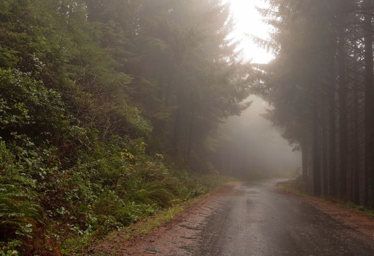 Landscape of foggy morning along one lane road in the forest Forest Foggy Oregon Tree Plant The Way Forward Fog Direction Road Nature Beauty In Nature Transportation Tranquility No People Diminishing Perspective Tranquil Scene Day Green Color Wet Rain Outdoors Scenics - Nature