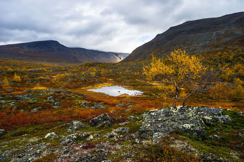 September hiking along The King's Trail in northern Sweden Autumn Beauty In Nature Birch Cloudy Day Fall Hiking Kaitumjaure Kungsleden Mountain Nature No People Northern Europe Orange Color Outdoors Rain Red Remote Scandinavia Teusajaure The Kings Trail Tranquility Valley Water Yellow