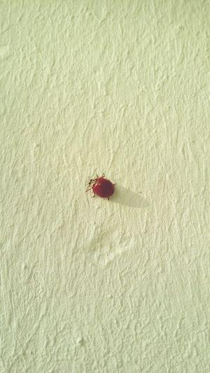 Dresden Marienkäfer🐞 Marienkäfer Ladybug Ladybird Animal Tiere Tier 🐞