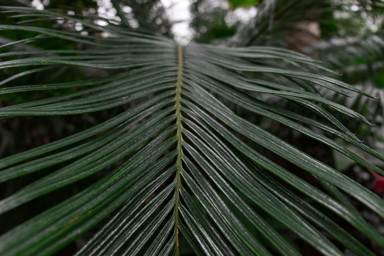 Close-up of fresh green leaves in forest