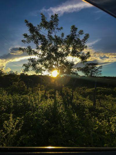 sun Sky Plant