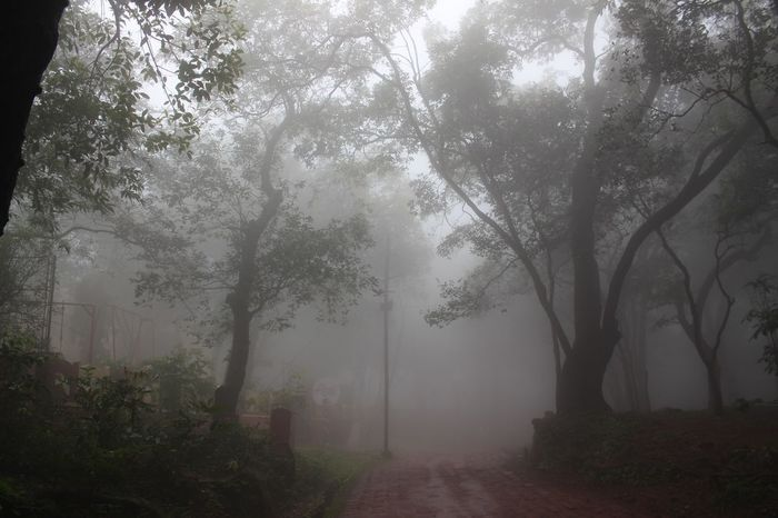 The engulfing morning mist at Matheran, Maharashtra Matherandiaries Forest Mist Fog Tree Forest Outdoors Nature Autumn Mystery Spooky Morning Beauty In Nature Beauty Landscape Tranquility Scenics Smog Rural Scene No People