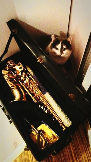 By Katy Wee. Arranged by me🐈🎷 Pets Music