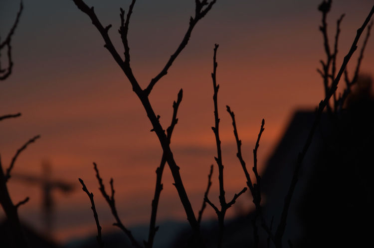 #Blue #dégradé #nature_collection #EyeEmNaturelover #nature #nikonD3200 #NoFilter #nofilter#noedit #red #sky #sunset #sunset #sun #clouds #skylovers #sky #nature #beautifulinnature #naturalbeauty #photography #landscape #sunset Sky #TakingPhotos  #trees #Window #winter Moments #winter Trees Atmosphere Branch Focus On Foreground No People