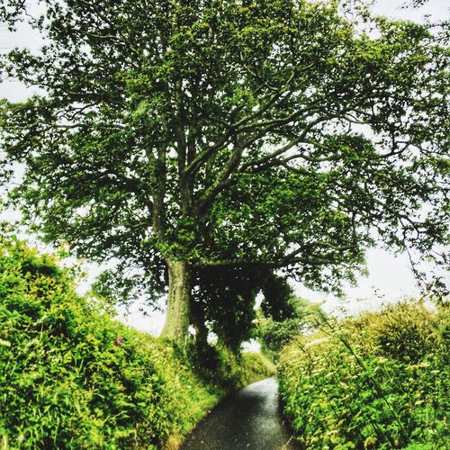 Trees Tree Green Nature Cornwall Countryside United Kingdom