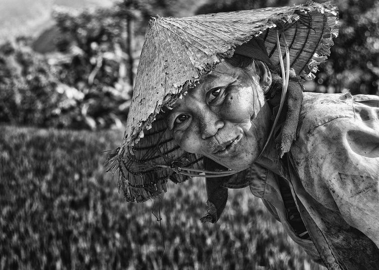 Job One Person People Portrait Rice Travel Vietnam Vietnamese Woman Woman Portrait