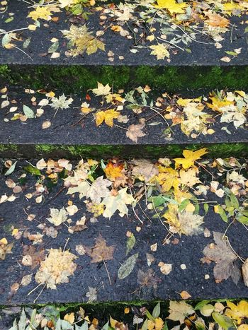 Leaf Autumn Change Nature No People Backgrounds Pattern Full Frame Day Fragility Beauty In Nature Growth Outdoors Close-up Scenics Steps Steps And Staircases Bath