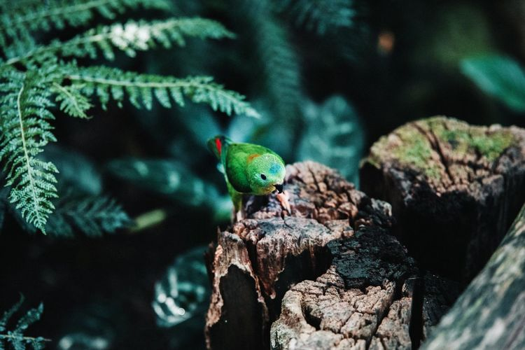 Close-up of green bird perching on rock