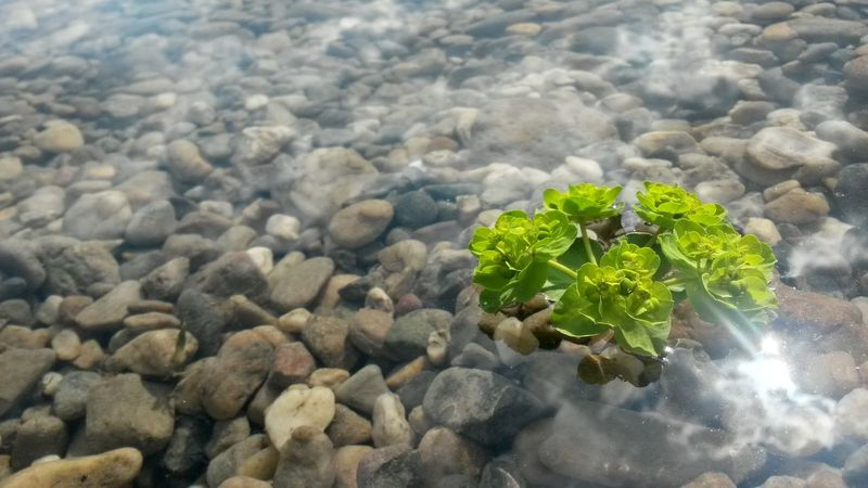 Nature Green Color Growth Leaf Water Outdoors Beauty In Nature Day No People Close-up Agriculture Freshness