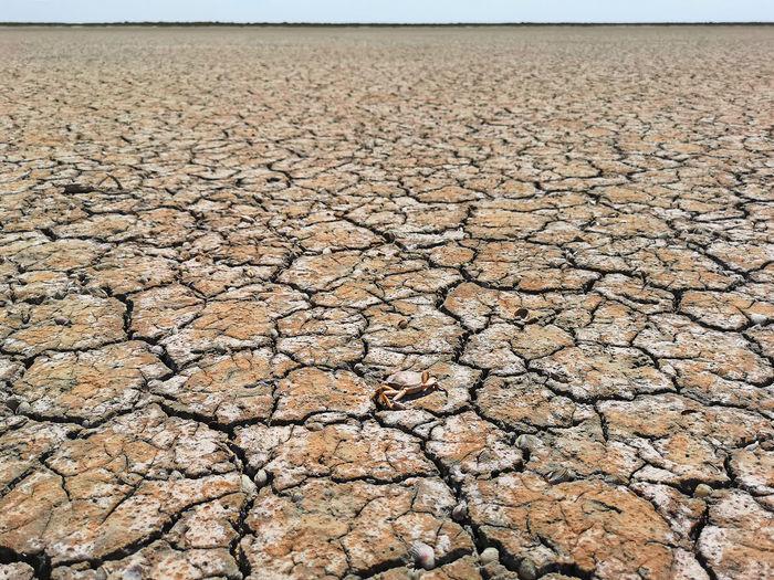 Surface level of cracked land
