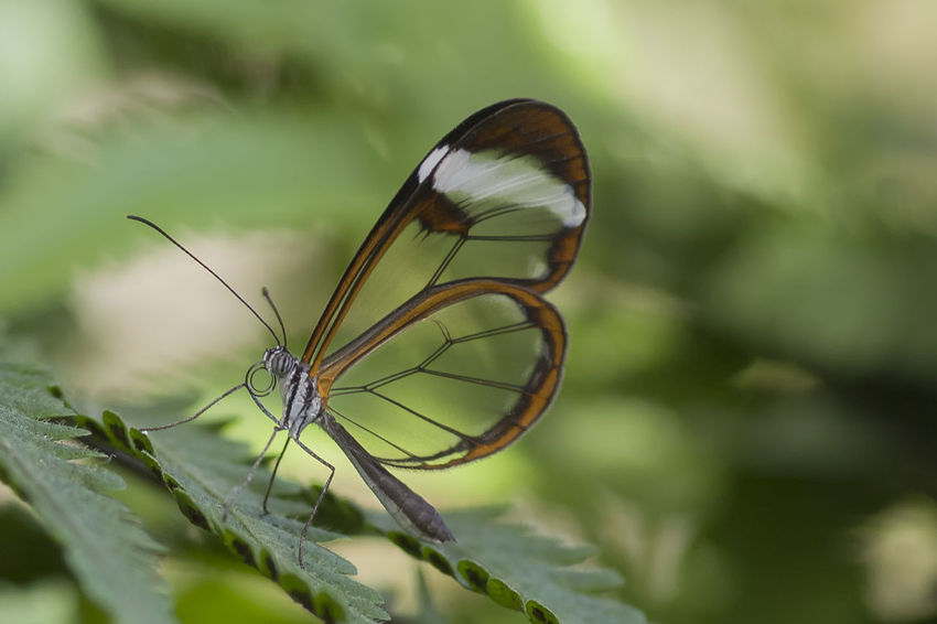 Butterfly Close-up Focus On Foreground Insect Macro Makeup One Animal Papillion Schmetterling