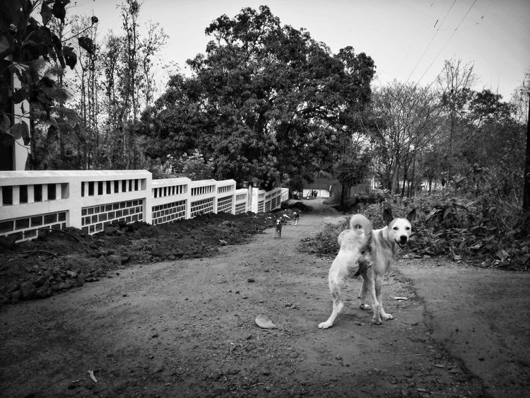 Animal Themes Goa Tree Pets Light And Shadows Mobile Photography EyeEm Best Shots - Black + White Natural Simplicity Mobileart Mobile_photographer Natural Pattern EyeEm Best Edits Shades Of Grey Tree Village Life India Mobileartistry Domestic Animals