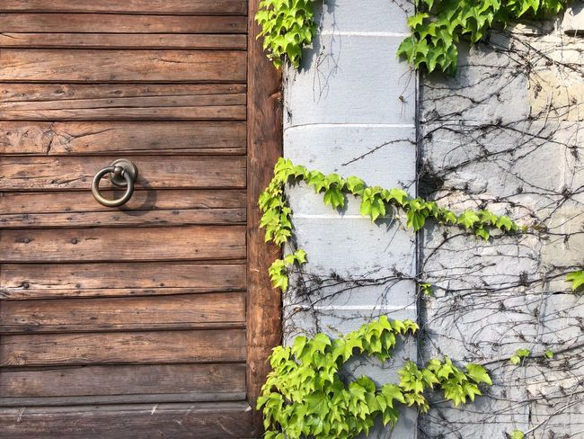 Ferragamo Il Borro Wood - Material No People Leaf Textured  Day Architecture Growth Plant Part Green Color Old Plant Wall - Building Feature Building Exterior Weathered Ivy Brown Built Structure Nature Outdoors Close-up Visual Creativity