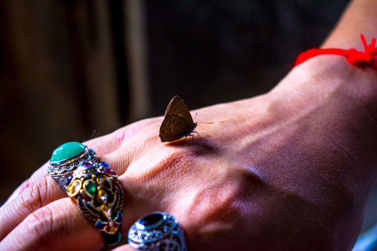 The butterfly stops flying at his hands Human Hand Hand Human Body Part Close-up One Person Jewelry Adult Holding Ring Focus On Foreground Wealth Indoors  Day Finger Human Finger Diamond - Gemstone Personal Accessory Butterfly Friendly Friendship Relax Nature