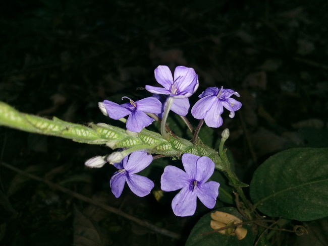 Flower Nature Freshness Beauty In Nature Purple Outdoors Leaf Green Color No People Close-up Plant Light Purple Flowers