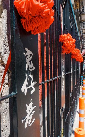 Close-up of orange flower hanging on building