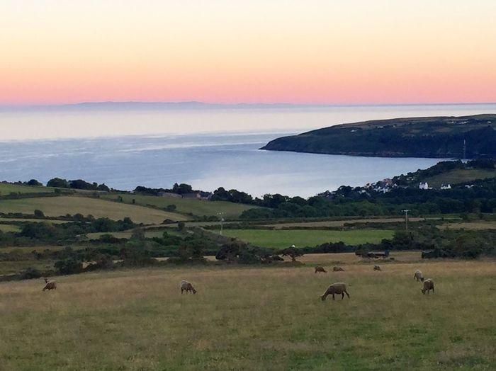 Running Laxey Sea And Sky Isle Of Man Summer Sunset #sun #clouds #skylovers #sky #nature #beautifulinnature #naturalbeauty Photography Landscape [ Sheep