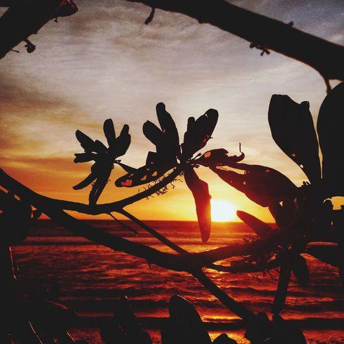 Pantai terbaik utk melihat sunset di malang