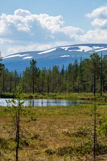 Fulufjället Summer Mountains Hiking Outdoor Life Sweden Scandinavia Fulufjället National Park Cloud - Sky Sky Plant Tree Beauty In Nature Water Nature Tranquility No People Non-urban Scene Scenics - Nature Landscape