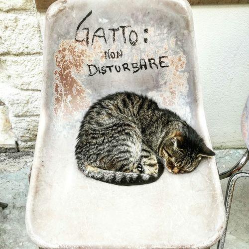 Cat : do not