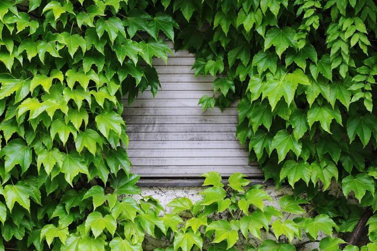 Closed Rollerblinds Depressed Depression - Sadness Contrast Leaf Green Color Plant Nature Growth Day Outdoors Freshness