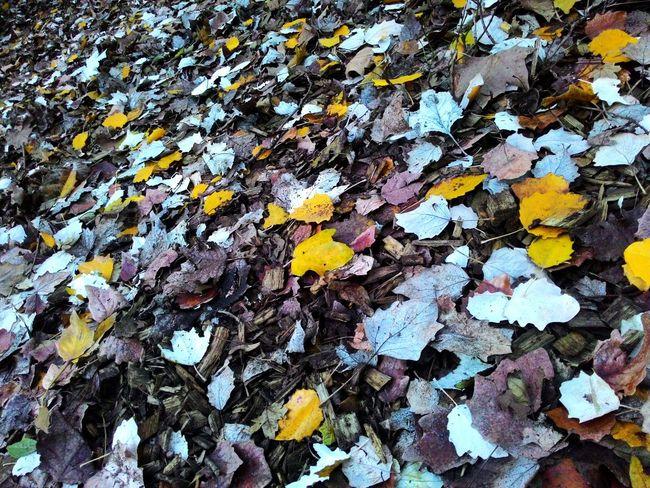 Autumn Leaf Autumn Colors Autumn Leaves Otoño Otoño Hojas Fallen Leaves Hojas De Otoño Hojas Caidas Hojas