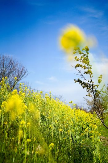 EyeEmNewHere EyeEm Best Shots EyeEmBestPics EyeEm Nature Lover Plant Growth Sky Beauty In Nature Nature Green Color Yellow Flowering Plant Flower Scenics - Nature Cloud - Sky Freshness