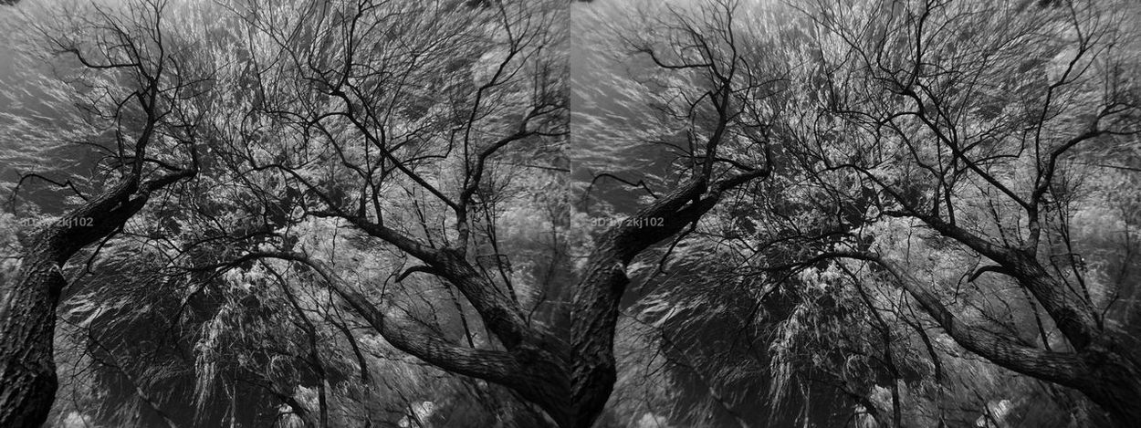 High 3D field and bottom 3D field Infrared In 3D Xiujiahu Shanghai, China Xujiahui Sunlight Sun Tree Vr Infrared Photo Infrared Photography Infrared Photography Infrared Photography Infrared Photo Stereoscopic Stereoscopic Photography 3D Vr 3D Art 3D Photo Full Frame Backgrounds Growth Nature Day Outdoors Sky No People