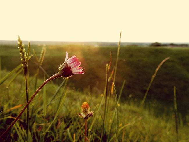 Nature Pink Color Flower Outdoors Plant Focus On Foreground Close-up Day Grass Landscape Growth Field Beauty In Nature No People Cloud - Sky Fragility Rural Scene Sky Freshness Flower Head EyeEm Best Shots Nikonphotography Scenics Beauty In Nature Nature