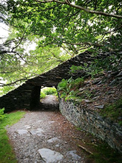 Wales Wales UK Tree Scene Tunnel Outdoors