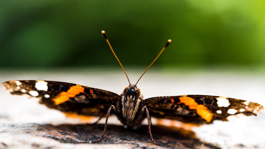 Hello camera Admiral Animal Antenna Animal Markings Beauty In Nature Butterfly - Insect Close-up Day Focus On Foreground Fragility Fresh On Eyeem  Ground Insect LUMIX GX8 Natural Pattern Nature No People Outdoors Schmetterling Selective Focus The The Week On Eyem Tranquility Showcase June